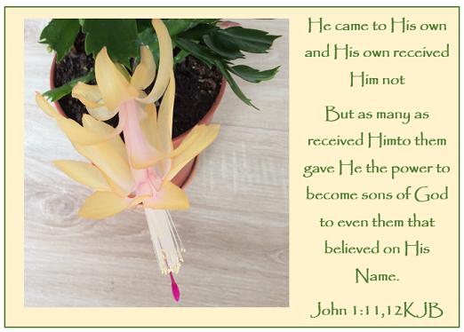 John 1_12KJB.png